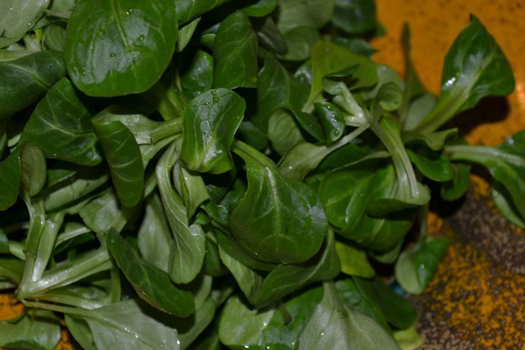 Feldsalat