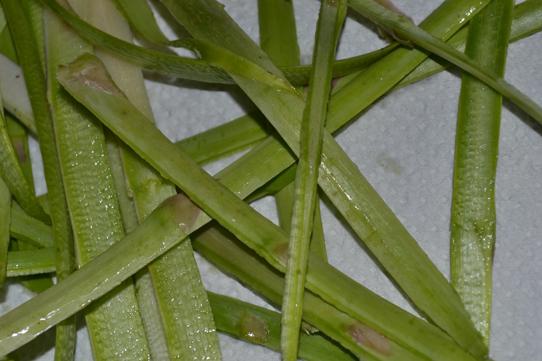 Schalen von grünem Spargel