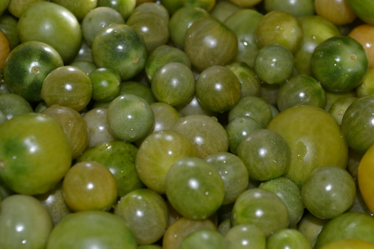 grüne Cherry-Tomaten