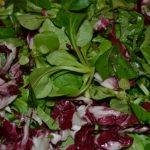 Blattsalate